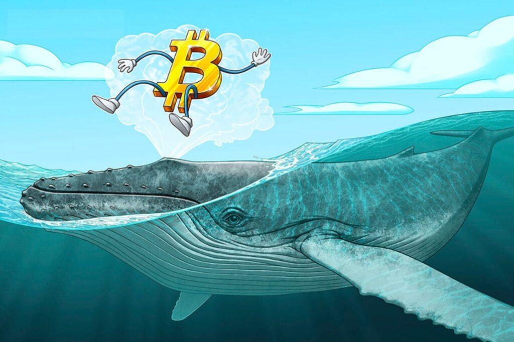Las ballenas de Bitcoin se mantienen activas con los máximos históricos