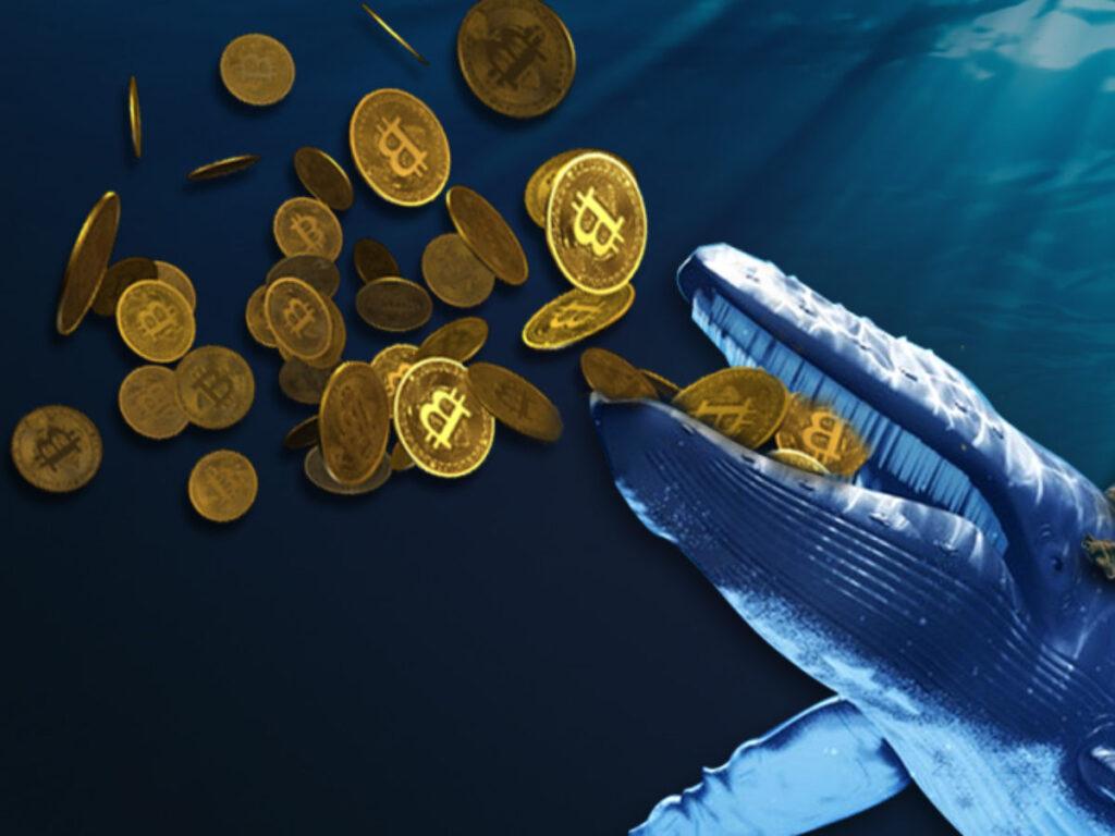 Las ballenas de Bitcoin incrementan la volatilidad